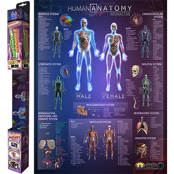 Human Anatomy Interactive Smart Chart