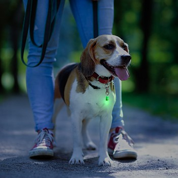 Pet Blinkers™ Flashing LED Pet Safety Light - NEW DESIGN!